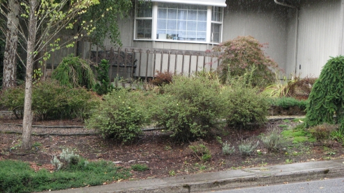 Landscaped Yard, No Lawn | Image | Tim Chuey