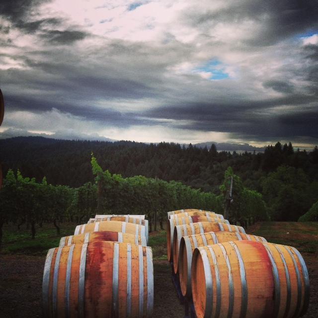 KV barrels and vines