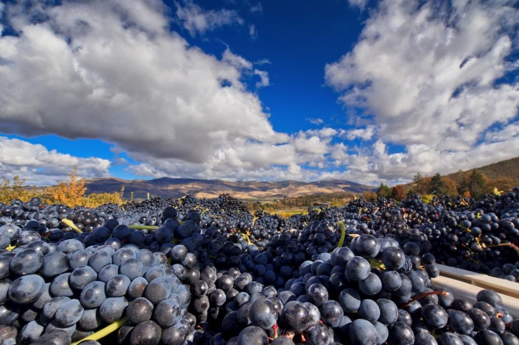 vineyard-ledger-david-photo-credit-marc-salvatore (1)