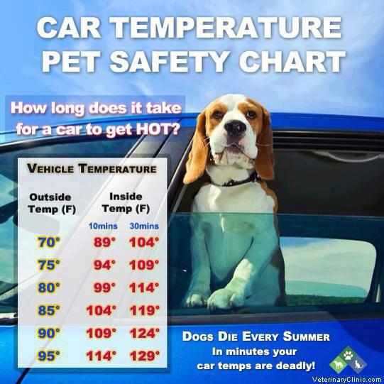 Chart Hot Car