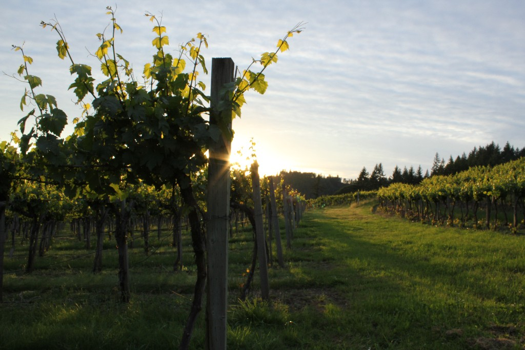Airlie-Winery-Oregon