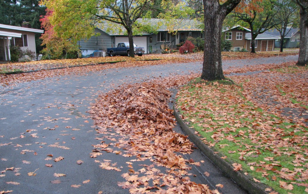 Leaf Pile Begins In South Eugene | photo by Tim Chuey