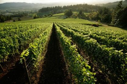 adelsheim-vineyard-bryan-creek-vineyard-kent-derek-studio