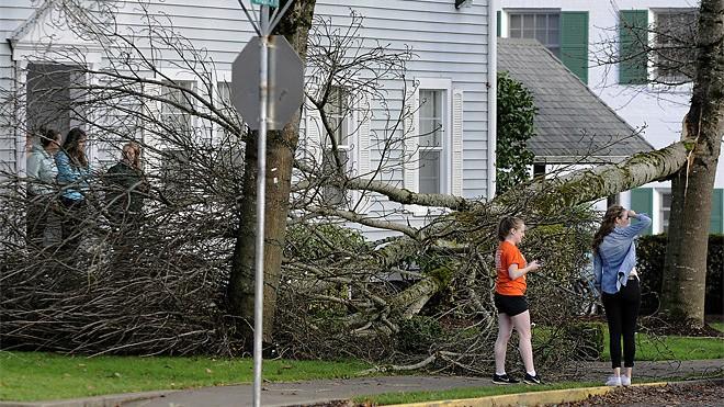 Tree Blown Down In Corvallis | The Corvallis Gazette-Times Amanda Cowan -kval.com