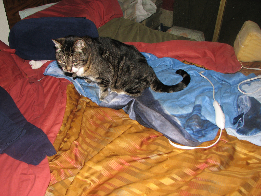 Rolland On His Heating Pad On Bed To Keep Him Warm |photo by Tim Chuey