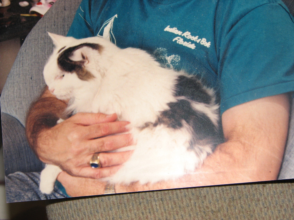 My First Pet Malibu | photo from Greenhill Humane Society