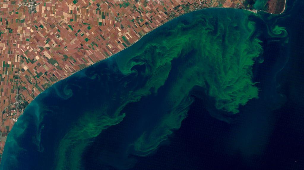 Satellite View Of Algae