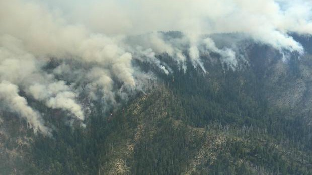 Buckskin Wildfire
