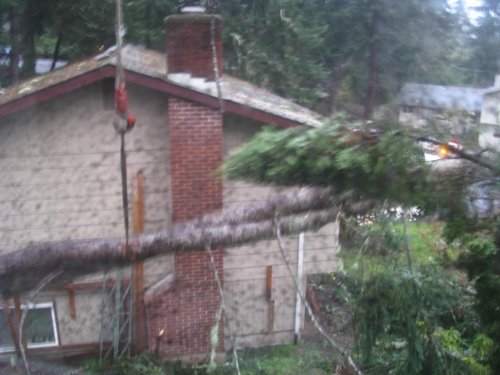 Tree Blown Down