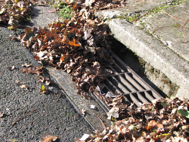 Leaves In Storm Drain