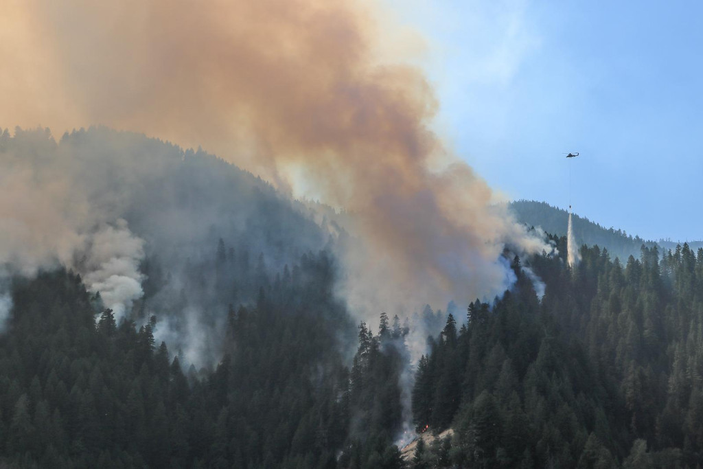 Terwilliger Wildfire
